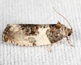 2769 - Poplar Leafroller - Pseudosciaphila duplex