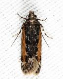 Moths June