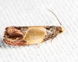 2749 - Sculptured Moth - Eumarozia malachitana