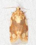 3624 - White-spotted Leafroller Moth - Argyrotaenia alisellana