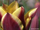 Paars en geel - purple and yellow