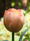Een bijzonder rose - a special shade of pink