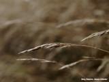 Grasaren  -- Grass