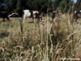 Limburgse weide -- Meadow in Limburg