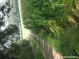 Akker, bos en weide - field, wood and meadow