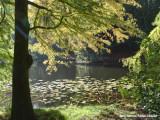 Vijver in het Ledeboerpark - Pond in the Ledeboerpark
