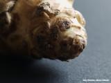 Aardpeer - Jerusalem Artichoke