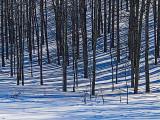 Suzane Whitney - 01 - Trees and Amazing Lines