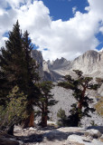 Foxtail pines and back up to Whitney summit