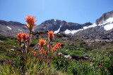 Indian paintbrush in meadows west of McGee Pass