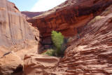 Scrambly section at lower Coyote Gulch