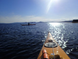 May- Kayaking locally out to Chanonry point