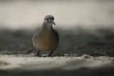 birds_of_seyshelles