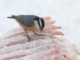Oiseaux Janvier-février 2020