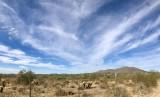 Desert Hills Arizona