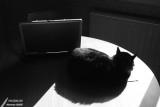 10-04-2007 : Cat in the sun / Chat au soleil
