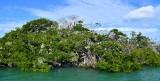 Mangrove in Yellow Shark Channel, Islamorada, Florida Keys, Florida 705