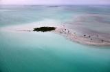 Mangrove on Cross Bank, Plantation Key, Islamorada, Florida Keys, Florida 133