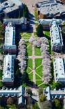 University of Washington, Cherry Blossom at the Quad, Seattle, Washington 046