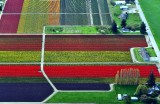Tulip fields in Skagit Valley Skagit Tulip Festival, Mt Vernon, Washington 137