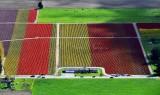 Tulip fields in Skagit Valley Skagit Tulip Festival, Mt Vernon, Washington 249