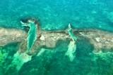 Old Sweat Bank, Florida Bay, Florida Keys, Fllorida 659