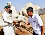Kissing Camel at Salman's farm 663