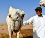 Salman and camel, Al Ghat Saudi Arabia 650