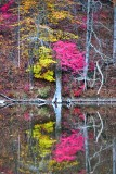 Pink Tree on Wallkill Lake, New York 199