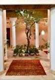 Tree in small courtyard, Riyadh, Saudi Arabia 411