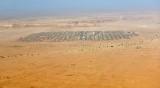 Camels Market in Saudi Desert, Riyadh Region, Saudi Arabia 164a