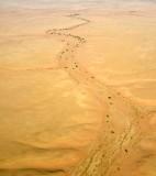 Life in dry river, Riyadh Region, Saudi Arabia 188