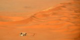 Sand Dunes in Saudi Desert, Riyadh Region, Saudi Arabia 1605