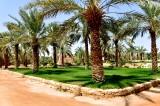 Landscape on Date Farm in Riyadh, Saudi Arabia 118