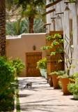 Kitten on Dates Farm in Riyadh, Saudi Arabia 334