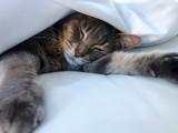 Linus in bed