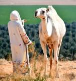 Logan and Mother Camel, Al Ghat, Saudi Desert, Saudi Arabia 573