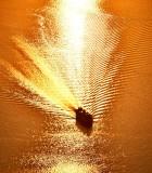 Washington State Ferry on Golden Water of Puget Sound at Sunset, Washington 701