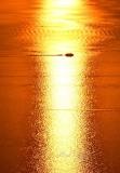 Boat Traffics at Sunset on Puget Sound, Washington 715