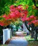 Autumn Colors on Flora Ave S, Van Asselt neighborhood, Seattle, Washington 039