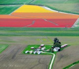 Daffodil and Tulip Fields in Skagit Valley, La Conner, Washington 101a
