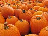 Pumpkins at a nearby farm