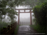 Torii in the Mist