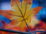 Plastic Leaf