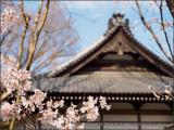 Sakura and Temple