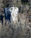 Snowy-Owl-sort of. ( Someone has a sense of humor, this was taken way off the beaten track.)