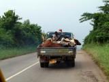 Koeien-transport.jpg