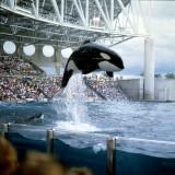 Orka-florida.jpg