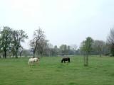 Paarden-wei01.jpg