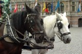 Paarden41.jpg